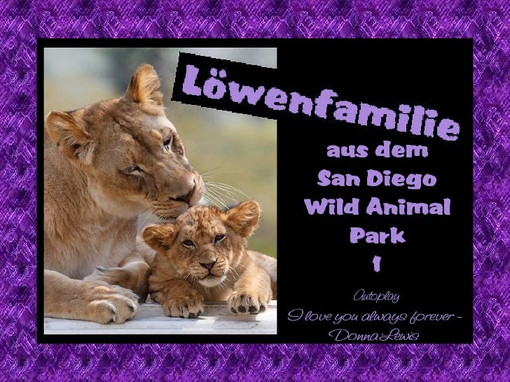 Lions' family life