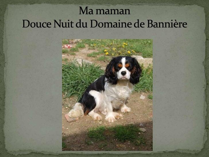 Ma mamanDouce Nuit du Domaine de Bannière<br />