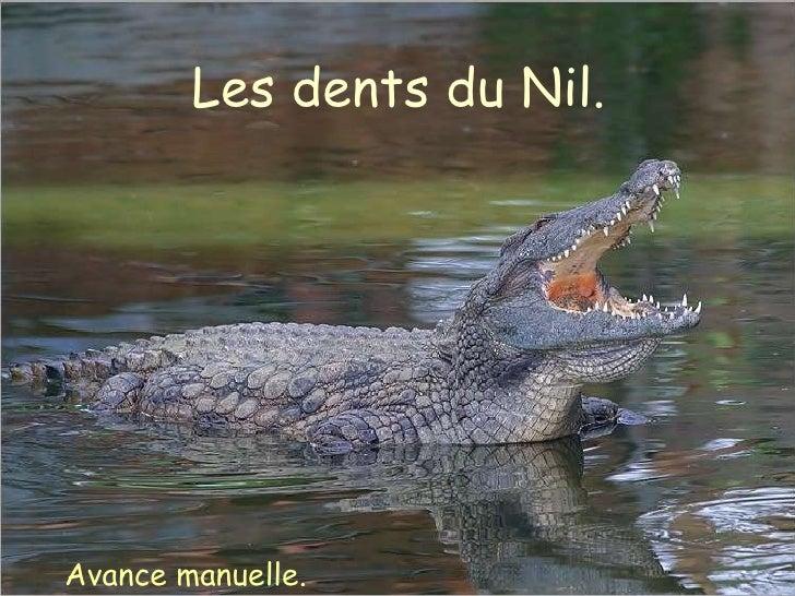 Les dents du Nil. Avance manuelle.