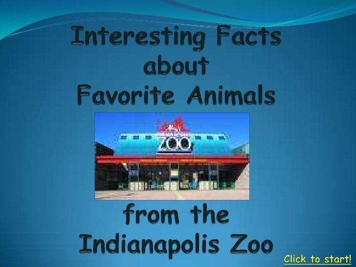 Animals Of The Indy Zoo
