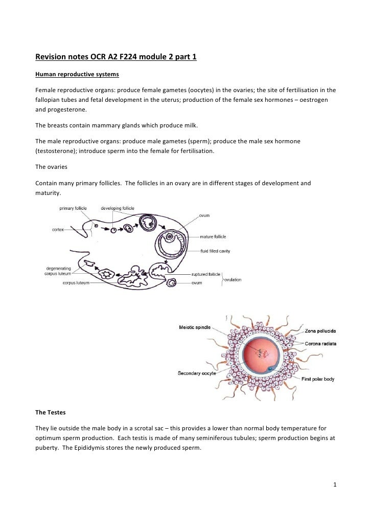 Revision notes OCR A2 F224 module 2 part 1 Human reproductive systems  Female reproductive organs: produce female gametes ...