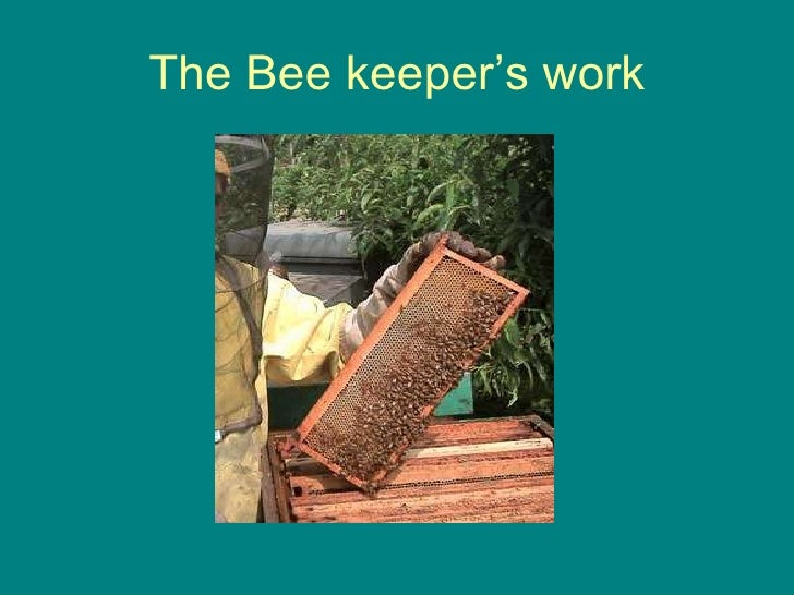 The Bee keeper's work
