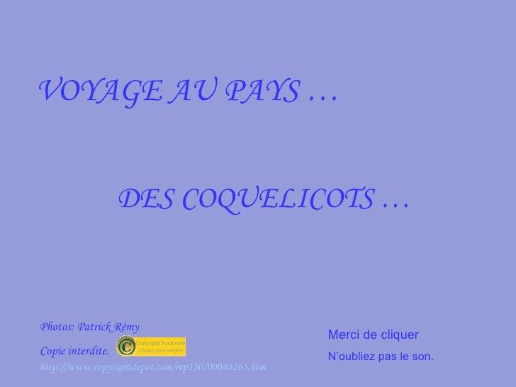 VOYAGE AU PAYS … DES COQUELICOTS … Photos: Patrick Rémy  Copie interdite. Merci de cliquer  N'oubliez pas le son. http://w...