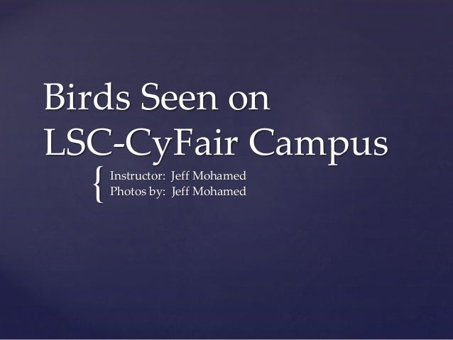 { Birds Seen on LSC-CyFair Campus Instructor: Jeff Mohamed Photos by: Jeff Mohamed