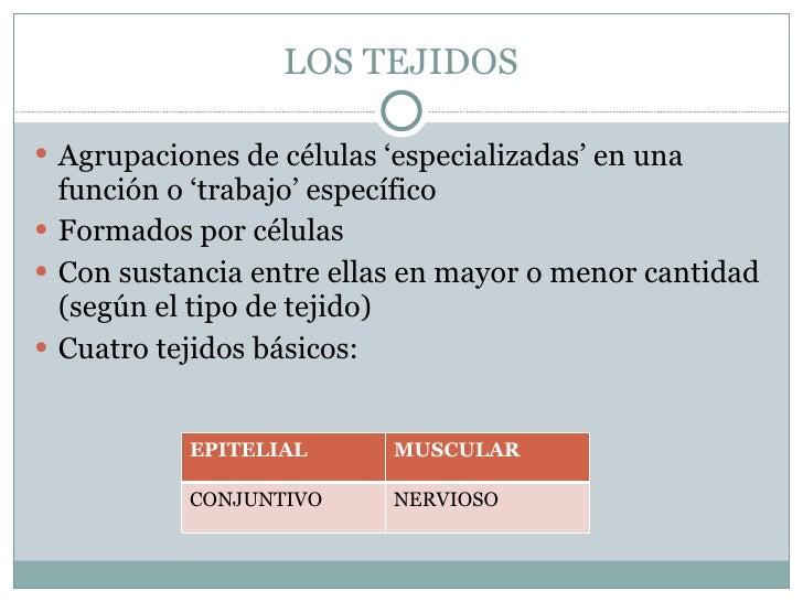 LOS TEJIDOS <ul><li>Agrupaciones de células 'especializadas' en una función o 'trabajo' específico </li></ul><ul><li>Forma...