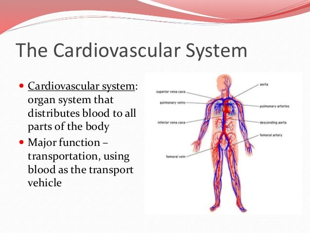 Heart Function Diagram With Human Body Human Heart Diagram And Function Human Heart Anatomy Is A Part Of 3 further Muscular System Diagram Main Muscle further Orbicularis Oculi as well Watch further Main Organs In The Circulatory System Circulatory Systems Organs Anatomy Body Charts 2. on function of circulatory system