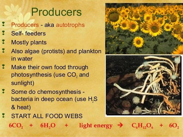 do humans use chemosynthesis Chemosynthesis - chemoautotrophs use energy from chemical reactions to make food the chemical reactions are usually between hydrogen sulfide/ methane with oxygen  carbon dioxide is the main source of carbon for chemoautotrophs.