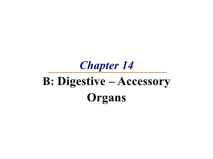 Chapter 14 B:  Digestive – Accessory Organs