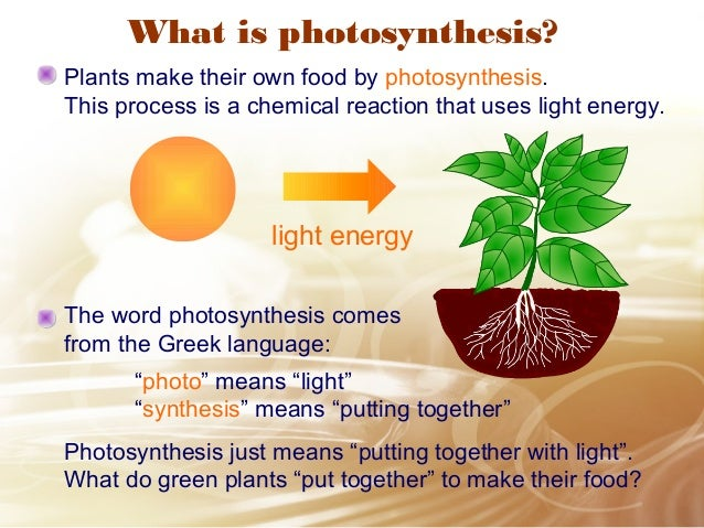 How Do Green Plants Make Their Own Food