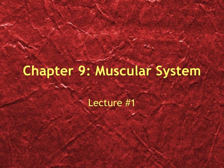 Chapter 9: Muscular System Lecture #1