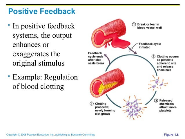 control mechanisms positive and negative Feedback circuits are at the root of most control mechanisms in physiology, and are particularly prominent in the endocrine system instances of positive feedback certainly occur, but negative feedback is much more common.