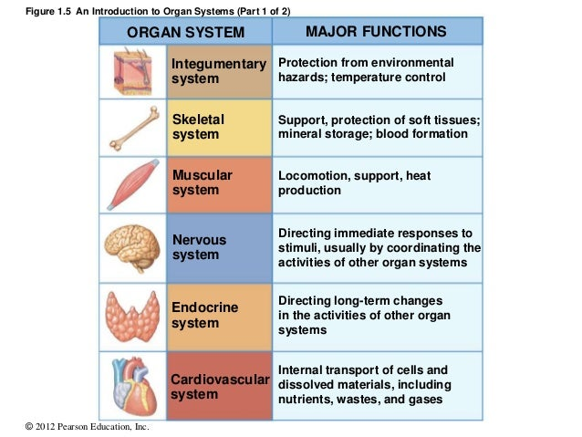 Muscular System Parts And Their Functions - industri.info