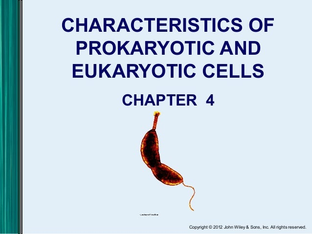 Copyright © 2012 John Wiley & Sons, Inc. All rights reserved. CHARACTERISTICS OF PROKARYOTIC AND EUKARYOTIC CELLS CHAPTER 4