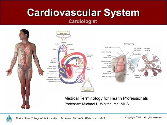 Cardiovascular SystemCardiovascular SystemCardiologistCopyright ©2011 All rights reserved.Florida State College of Jackson...