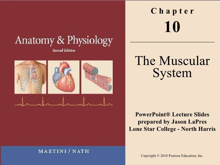 C h a p t e r 10 The Muscular System PowerPoint® Lecture Slides prepared by Jason LaPres Lone Star College - North Harris