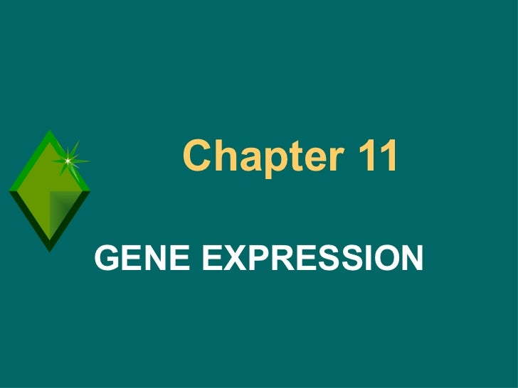 Chapter 11  GENE EXPRESSION