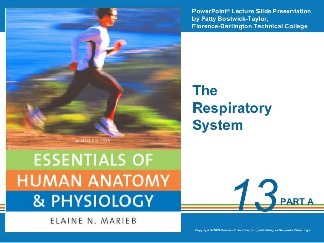 Ch13ppt respiratory system honors