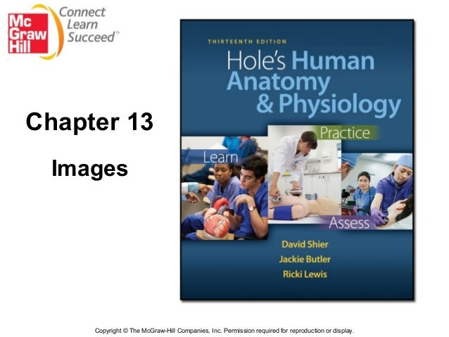 Chapter 13:  Endocrine System Hole's Human Anatomy and Physiology