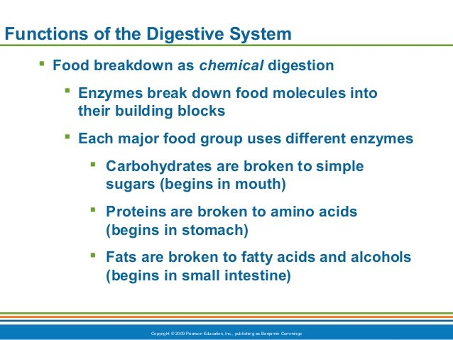 the chemical aspects of digestion and the breakdown of the proteins