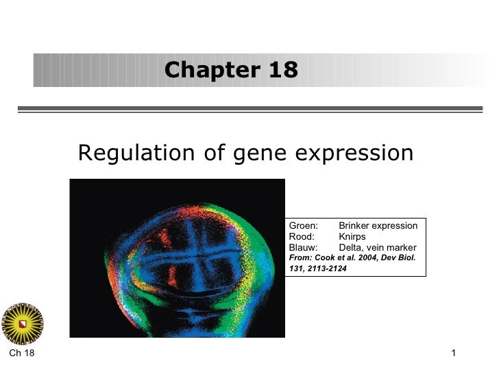 Chapter 18 Regulation of gene expression Groen: Brinker expression Rood:  Knirps Blauw: Delta, vein marker From: Cook et a...