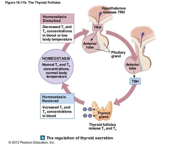 relationship between prealbumin and albumin