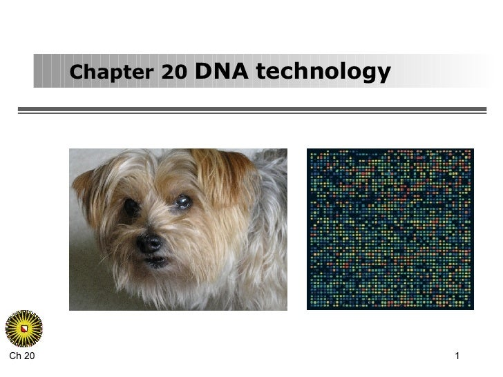 Chapter 20  DNA technology