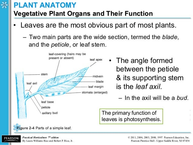 anatomy and phys i Anatomy & physiology the anatomy and physiology module introduces the structure and function of the human body you will read about the cells, tissues and membranes that make up our bodies and how our major systems function to help us develop and stay healthy.