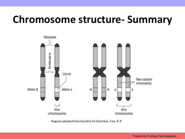 Ch2 Chromosome Structure on dna diagram labeled