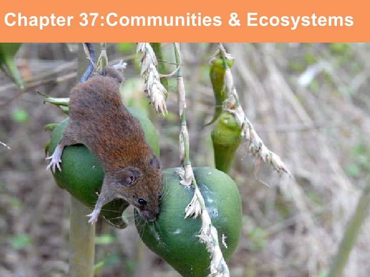 Chapter 37:Communities & Ecosystems Communities and Ecosystems