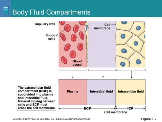 the constituents of body fluids Fluid balance body fluid compartments body fluid compartments  the interstitial fluid is composed of roughly the same chemical composition as the plasma.