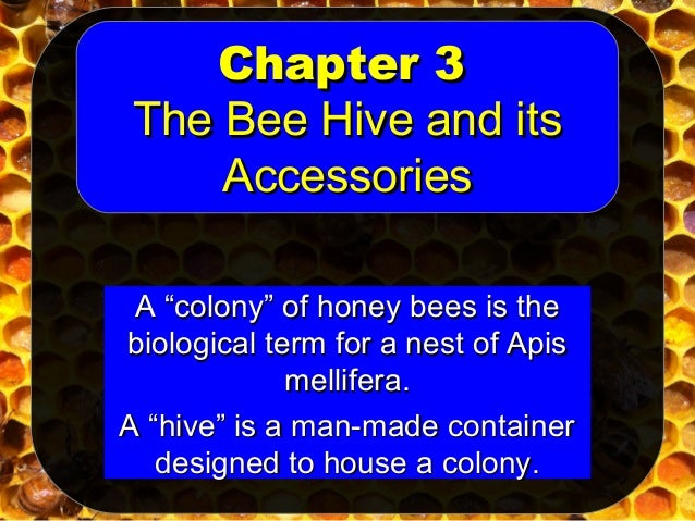 Ch 3 hive accessories derrick devereaux member la for Hive container homes