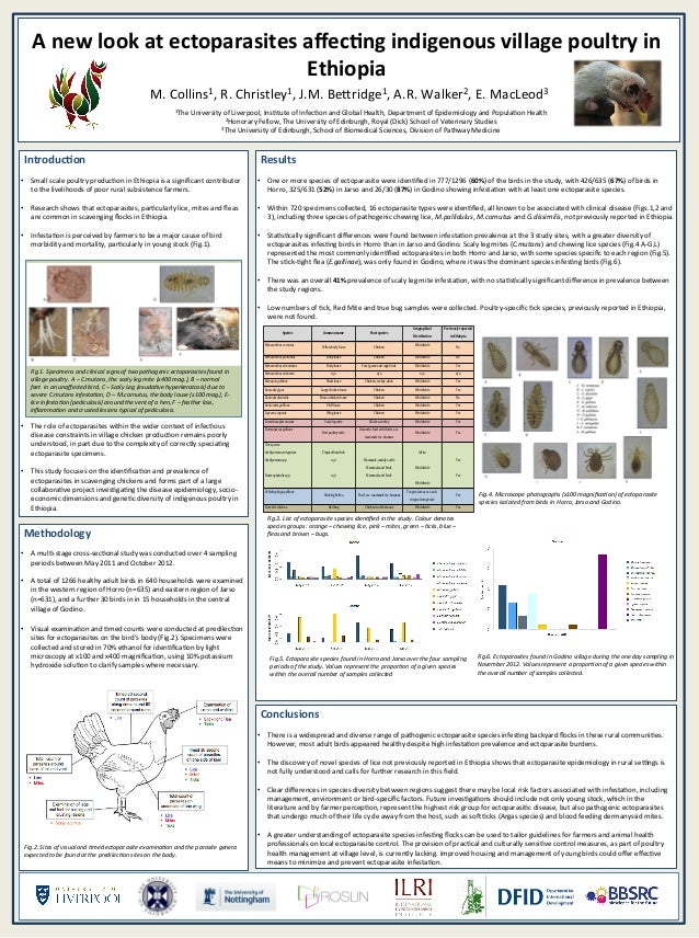 A new look at ectoparasites affecting indigenous village poultry in Ethiopia