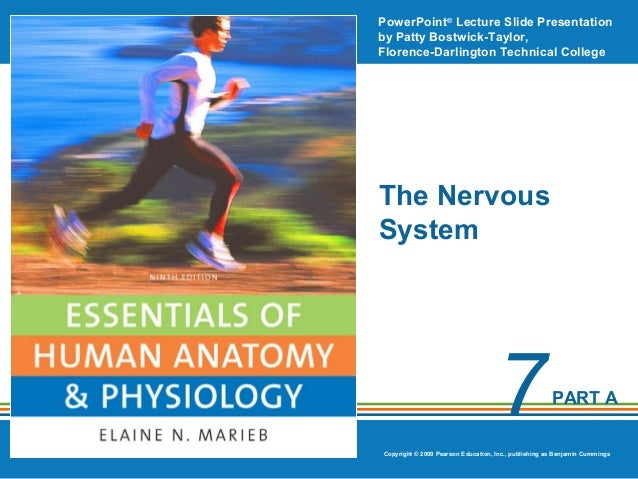 PowerPoint® Lecture Slide Presentation by Patty Bostwick-Taylor, Florence-Darlington Technical College  The Nervous System...