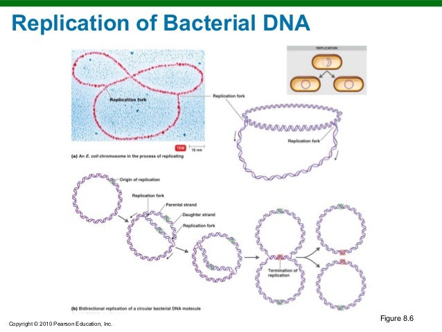 chapter 8 microbial genetics Test your knowledge with the microbiology- chapter 8- microbial genetics quiz.