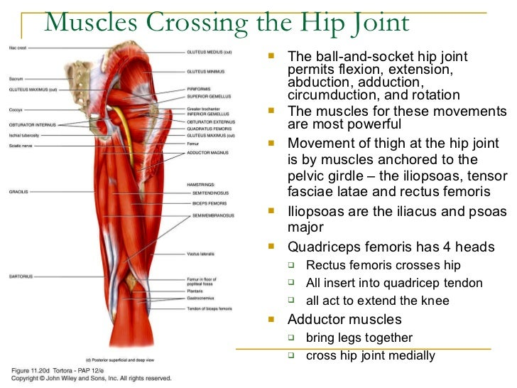 7 Facts about Hip Impingement your therapist didnt mention