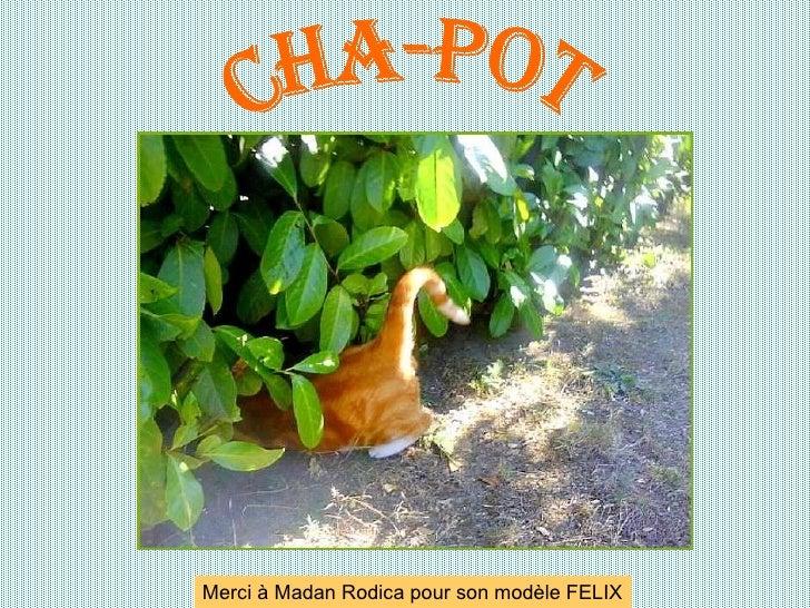 CHA-POT Merci à Madan Rodica pour son modèle FELIX