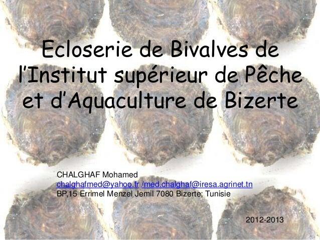 Ecloserie de Bivalves de l'Institut supérieur de Pêche et d'Aquaculture de Bizerte CHALGHAF Mohamed chalghafmed@yahoo.fr /...