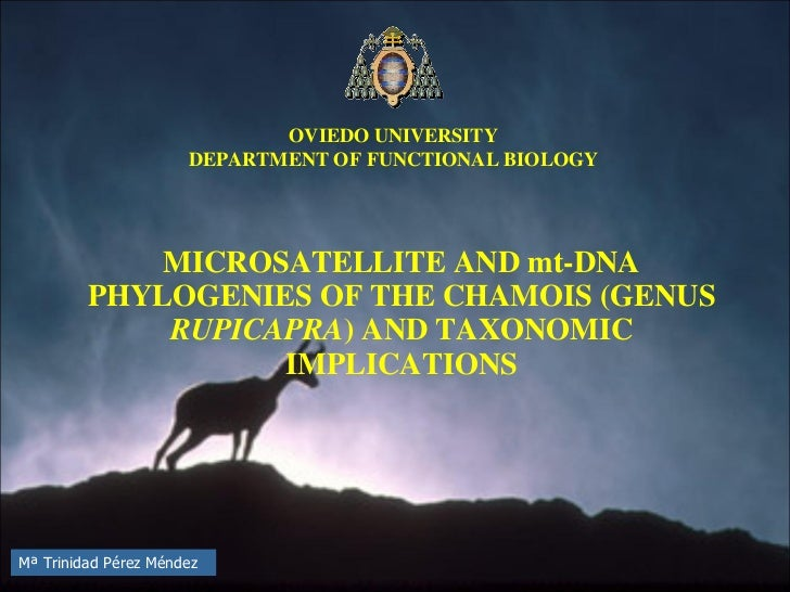 MICROSATELLITE AND mt-DNA PHYLOGENIES OF THE CHAMOIS (GENUS  RUPICAPRA ) AND TAXONOMIC IMPLICATIONS OVIEDO UNIVERSITY DEPA...