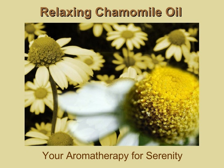 Relaxing Chamomile Oil Your Aromatherapy for Serenity