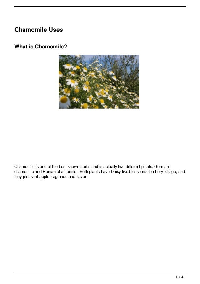 Chamomile UsesWhat is Chamomile?Chamomile is one of the best known herbs and is actually two different plants. Germanchamo...