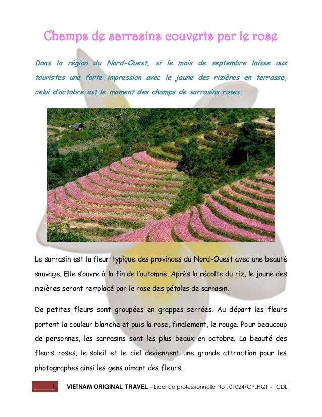 1 VIETNAM ORIGINAL TRAVEL – Licence professionnelle No : 01024/GPLHQT – TCDL Champs de sarrasins couverts par le rose Dans...
