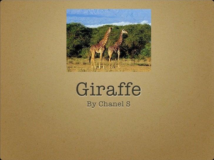 Giraffe  By Chanel S