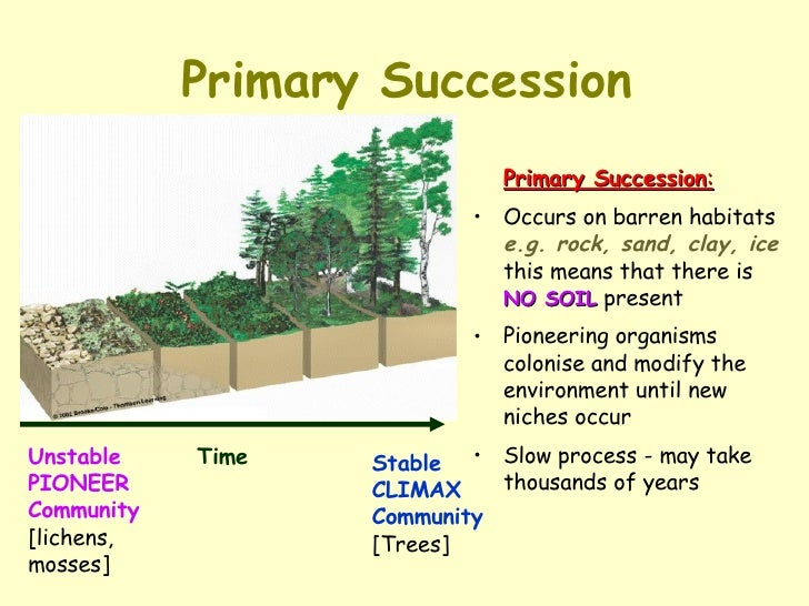 What Is An Example Of Ecological Succession Example