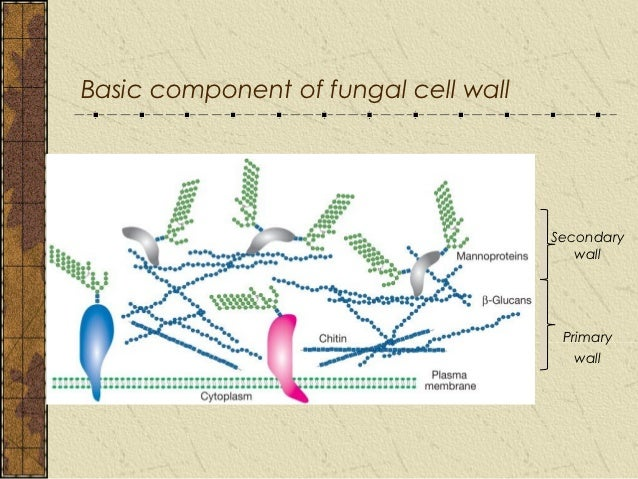 Yeast Cell Wall Structure Chap 2 fungal cell