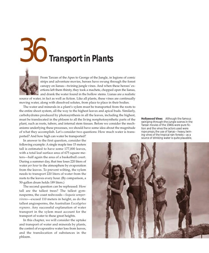 36                    Transport in Plants                 From Tarzan of the Apes to George of the Jungle, in legions of c...