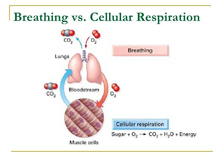 comparison between cellular respiration and photosynthesis