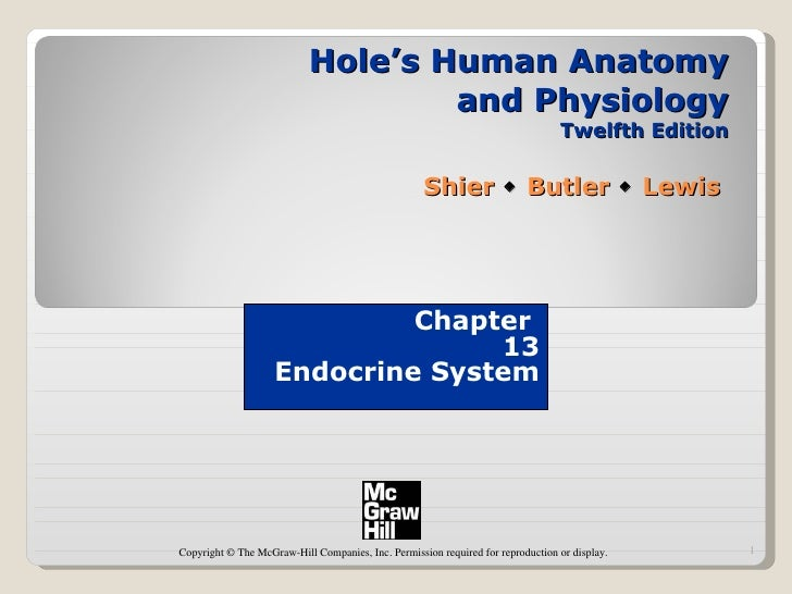 Hole's Human Anatomy and Physiology Twelfth Edition Shier    Butler    Lewis  Chapter  13 Endocrine System Copyright © T...