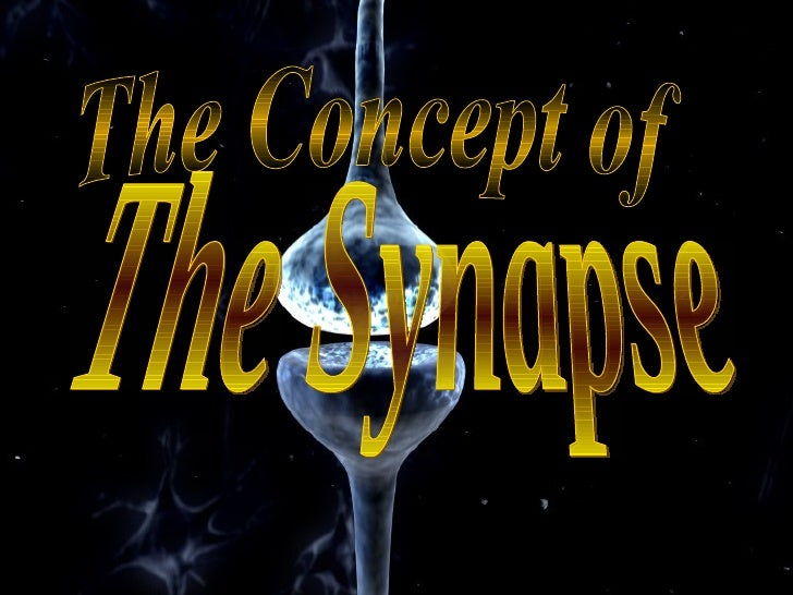 The Concept of The Synapse
