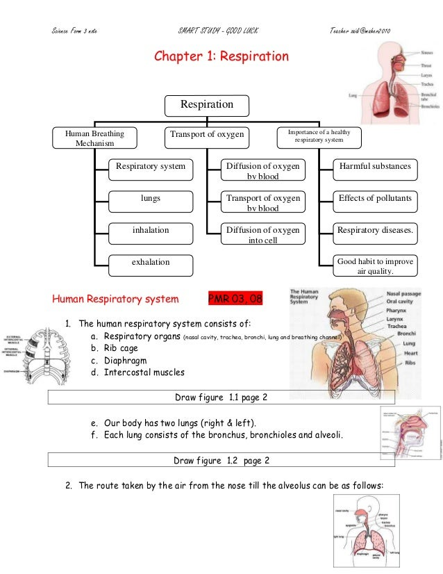 Chapter 1-respiration-doc1