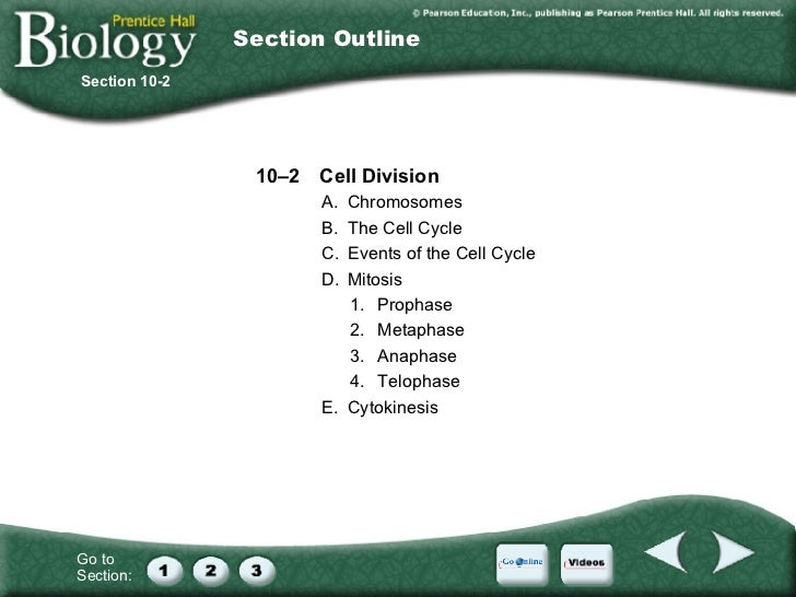 Section 10 2 cell division worksheet answer key